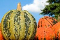 pumpkin-2740305__340